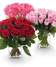 20 Beautiful roses vased and delivered, Same day,