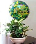 St Patrick's Day Planter