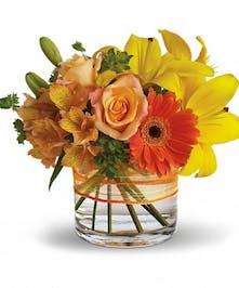 Delightful & Cheery - Cincinatti (OH) Adrian Durban Florist