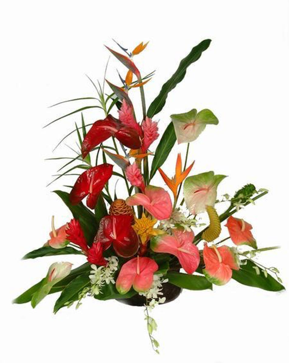 Tropical Exotic Flower Arrangement - Cincinnati Florist - Adrian ...