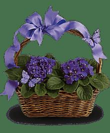 Long Lasting Violets!