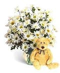 Fresh Daisies & Teddy Bear!