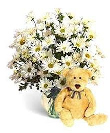 Daisies spread their good cheer to everyone!