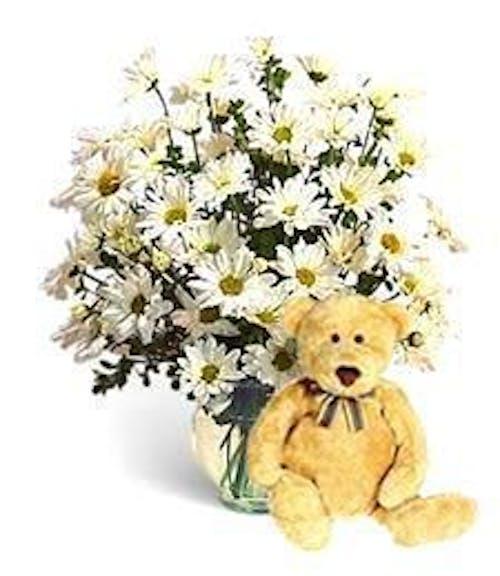 Fresh Daisies & Teddy Bear!