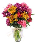 Rainbow of Alstroemeria Bouquet