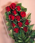 Fresh Red Roses  Boxed  Cincinnati Delivery Area