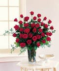 48 Roses Shown