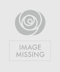 Vase Only