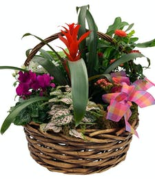 Tropical Blooming Garden Basket with Assorted  Plants